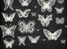 漂亮精美手绘的线框蝴蝶图像Photoshop蝴蝶花纹、印花笔刷素材下载