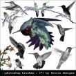 真实的蜂鸟飞行姿势图案Photoshop鸟类笔刷