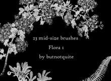 23种热带丛林里的植物图像PS笔刷下载