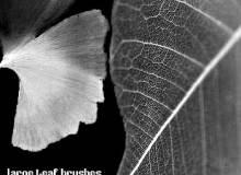 大片树叶、枯叶、叶片图像PS笔刷下载
