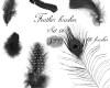 15种漂亮的珍禽野兽羽毛图案Photoshop笔刷下载