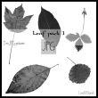 落叶、枯叶、树叶、叶子图案Photoshop笔刷素材下载(JPG图片格式)