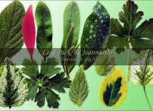 绿色叶子、树叶、叶片Photoshop笔刷素材下载(已抠图,PNG透明图片格式)
