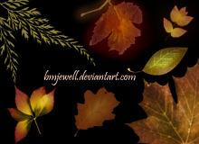 树叶落叶、枫叶、枯叶子PS笔刷下载