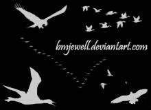 飞鸟、大雁群、鸟群等图案PS笔刷下载