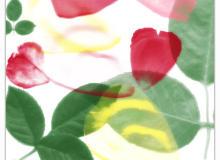 真实的鲜花花瓣、叶子图案素材PS笔刷下载