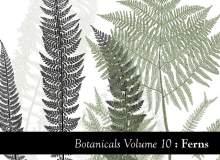 蕨类植物叶子图形PS笔刷素材下载