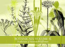 野花、野草植物图形PS笔刷下载