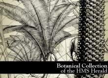 铁树植物图形PS笔刷下载