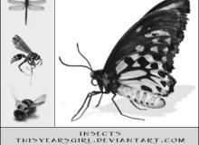 昆虫标本风格素材PS笔刷下载