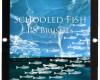 海底的鱼造影图案PS笔刷下载