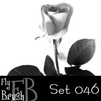 玫瑰花、鲜花花朵PS笔刷下载