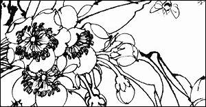 手绘漂亮的线框花纹图案PS笔刷素材免费下载