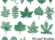 手绘54种树叶、叶子纹理效果PS笔刷素材