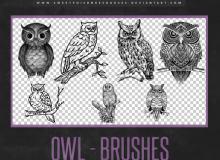 精美手绘猫头鹰、线框猫头鹰图形PS笔刷下载