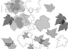 枫树叶、枫叶、树叶、叶子PS笔刷下载