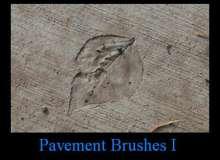 树叶、叶片化石图案PS笔刷下载