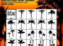 18种棕榈树、海边沙滩椰子树等大树剪影PS笔刷