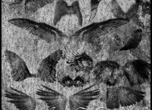 残酷的天使翅膀、羽翼天使PS笔刷下载