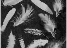 羽毛、鸟毛图案素材PS笔刷下载