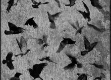 飞翔的鸟类图案、飞鸟图像PS笔刷下载