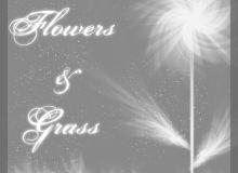 光影叠影花纹、花朵图案PS笔刷素材