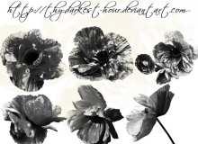 漂亮的蜀葵、盛开的花朵图案PS笔刷素材