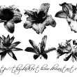 梦幻玫瑰茄花朵、漂亮的鲜花图案PS笔刷下载