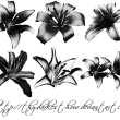 百合花花朵图案ps笔刷下载