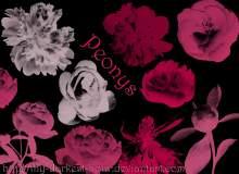 鲜花花朵、花束图形Photoshop笔刷素材下载