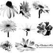 盛开的向日葵花朵、向日葵花束PS笔刷下载