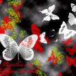 各种蝴蝶图案PS昆虫笔刷