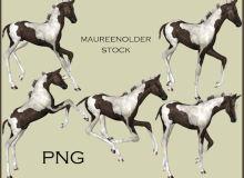 飞奔的骏马、矫健身姿的黑白马匹Photoshop笔刷下载(PNG图片素材)