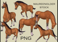 壮实的棕色骏马、站立的马图像Photoshop马笔刷素材(PNG图片素材)
