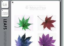 七彩枫叶造型素材PS笔刷下载(JPG图片格式免费下载)