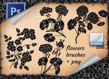 漂亮盛开的鲜花花朵花纹Photoshop笔刷下载