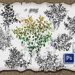 绿叶枝条花纹图案、叶子印花PS笔刷下载