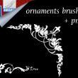 精美的植物花纹边框、边角图案PS笔刷素材下载