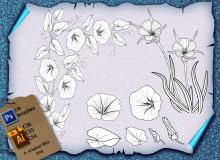 喇叭花、鲜花图案Photoshop植物花纹笔刷