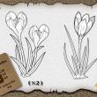 整株鲜花花朵图案、植物花纹PS笔刷下载