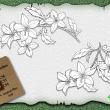铁线莲花朵图案、素描式花朵PS笔刷下载(Ai文件下载)