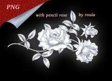 玫瑰花朵图案、鲜花花朵PS 笔刷素材(PNG格式素材)
