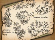 漂亮的手绘植物叶子、茎叶花纹图案PS笔刷下载