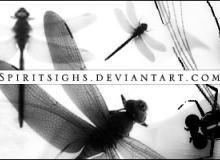 蜻蜓昆虫造型PS笔刷下载