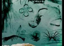 深海造影图形、海洋生物PS笔刷下载