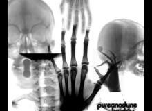 人体X光片效果、骨骼透视PS笔刷下载