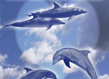 海豚生物PS笔刷下载