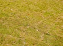 免费商用授权!春天的人工草皮、草坪、草地高清照片(6240X4160像素)