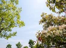 春天的下的蓝天背景图片PS素材下载!免费商用版权