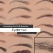 眉毛、画眉毛、女士眉线、眉峰、眉头PS笔刷素材
